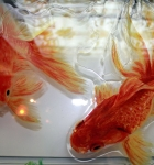 Золотые рыбки_4