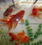 Золотые рыбки_5